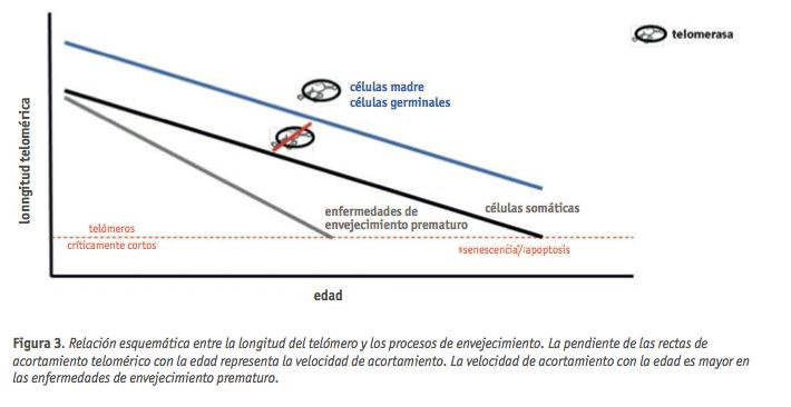 figura 3 formacion continuada dic 2012
